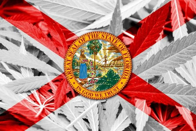 tampa decriminalization & florida marijuana laws